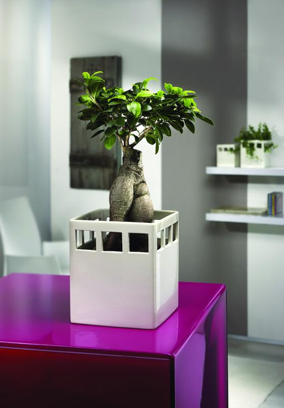 Farbgestaltung lila galerie for Farbwirkung raumgestaltung