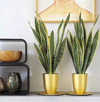 Zimmerpflanzen wohnideen dekoration pflanzen for Gartengestaltung 70er jahre