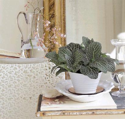 Zimmerpflanzen ? Wohnideen Für Dekoration Und Gesundes Leben ... Zimmerpflanzen Wohnideen
