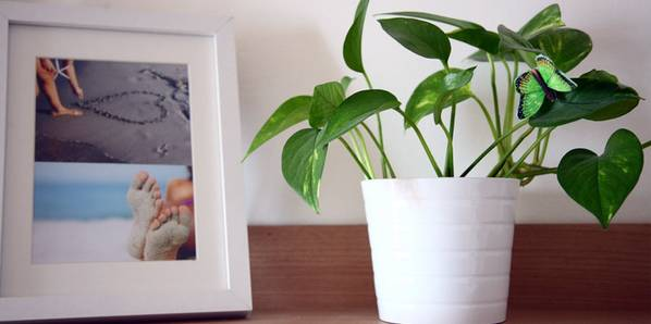 zimmerpflanzen pflegetipps die k bel und zimmerpflanzen. Black Bedroom Furniture Sets. Home Design Ideas