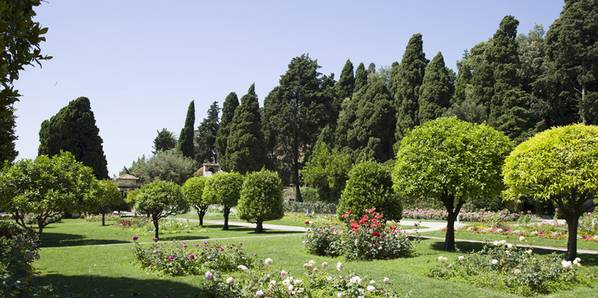 Die besten Bäume für den Garten