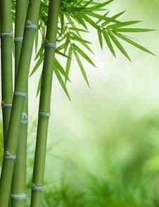 Bambus Im Garten Tipps Zur Pflege Und Haltung