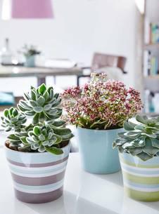 zimmerpflanzen verbessern das raumklima. Black Bedroom Furniture Sets. Home Design Ideas