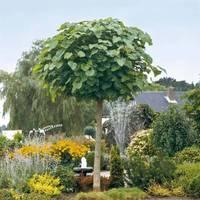 einen kindergerechten garten anlegen - der familiengarten - Baume Fur Den Vorgarten