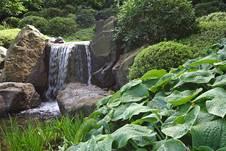 Wie pflegt man einen japangarten - Japangarten pflanzen ...