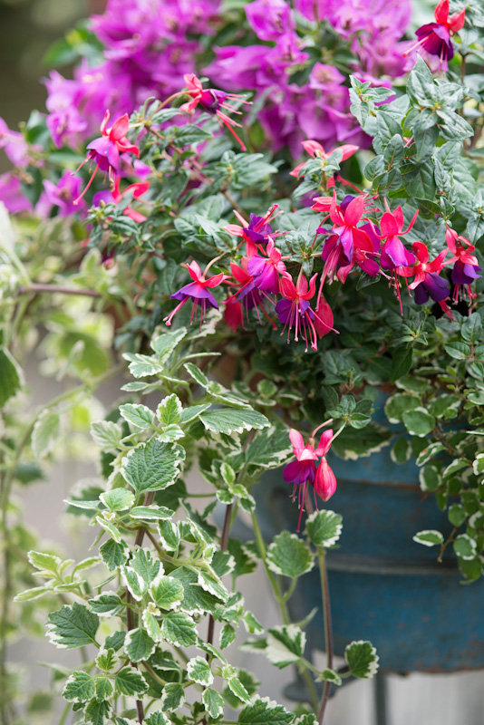 30 bl hende ideen f r den garten. Black Bedroom Furniture Sets. Home Design Ideas