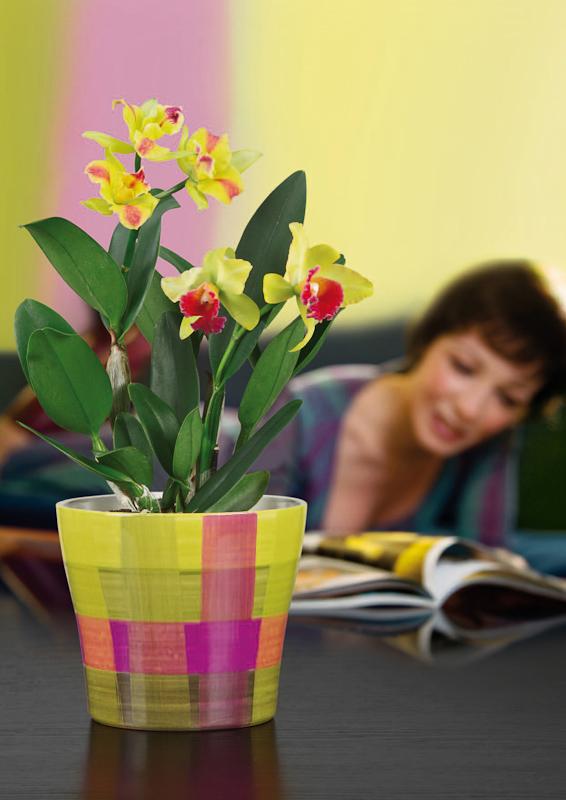 Zimmerpflanzen bilder for Zimmerpflanzen modern