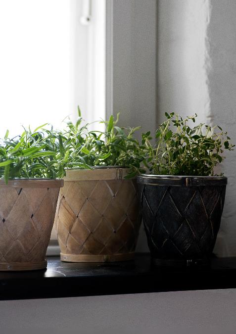 Zimmerpflanzen bilder - Tolle zimmerpflanzen ...