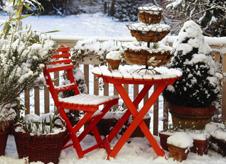buchsbaum beeren eibe und winterharte pflanzen f r den winterbalkon. Black Bedroom Furniture Sets. Home Design Ideas
