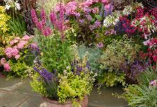 Krauter Aromapflanzen Lavendel Vanilleblumen Co Auf Dem Balkon