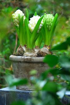 Fruhlingsblumen Pflanzen Zwiebelblumen Fur Garten Und Balkon