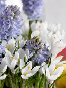 Blumen Im Fruhling Zwiebelblumen Pflanzen Wie Krokus Und Blaustern