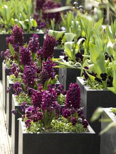 Gartengestaltung Mit Den Fruhlingspflanzen Tulpen Narzissen Und Co