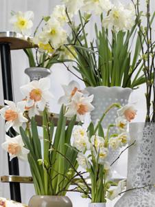 tulpen pflanzen oder narzissen im topf f r den fr hling basteln. Black Bedroom Furniture Sets. Home Design Ideas
