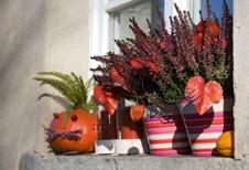 dekorieren mit heidepflanzen. Black Bedroom Furniture Sets. Home Design Ideas