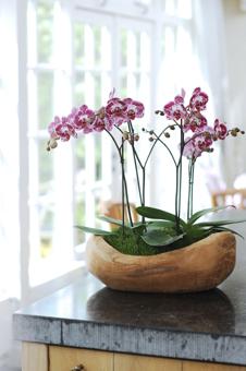 Im Sommer Lockt Die Orchidee