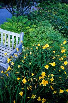 zitruspflanzen und taglilie exotische pflanzen f r den garten. Black Bedroom Furniture Sets. Home Design Ideas