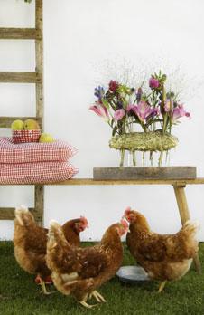 lilien disteln enzian die sch nsten herbstblumen im landhausstil. Black Bedroom Furniture Sets. Home Design Ideas