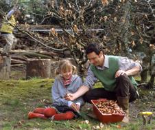 blumenzwiebeln pflanzen von hyazinthen schneegl ckchen und tulpen. Black Bedroom Furniture Sets. Home Design Ideas