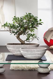 Zimmerpflanzen Modern steintöpfe für zimmerpflanzen zeitlos modern und vielseitig